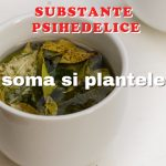 subs-psihedelice-soma